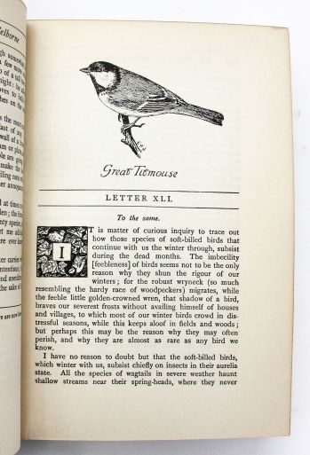 THE NATURAL HISTORY OF SELBORNE -  image 4